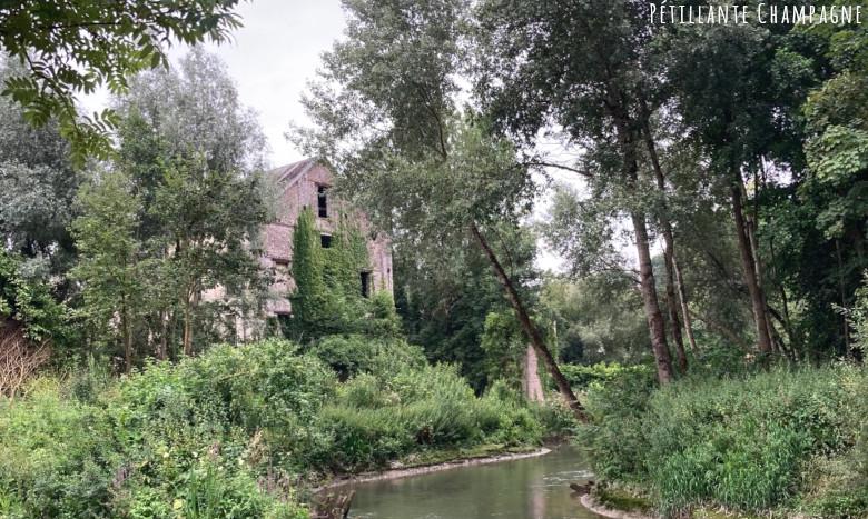 Marais de la Canche 2